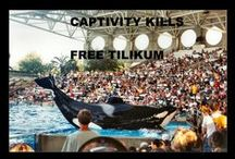 Say no to Dolphin/whale captivity!!!!! / by Jaime Shep