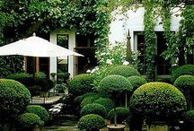 Buxus with Boxes ❤