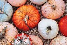 fall. / by Lauren Welch
