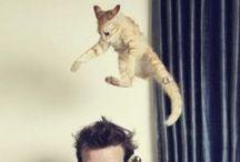 catCATcatCAT