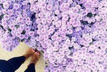 LAVENDER  H A Z E / #purple #style