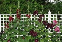 Flower Gardens / by Joan Ziegler