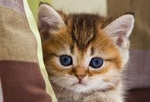 Cats {Check Meowt} / Tips and tricks for cats and such / by Kristin Briscoe