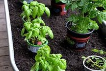 Gardening tips and tricks / Dig into gardening with easy how-tos and DIY ideas galore!