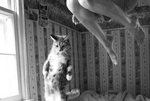 Kittie kittie kittie / by Circe Rafaela Teixeira