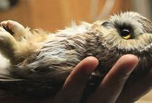 Owls  / by Circe Rafaela Teixeira