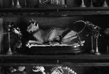 Curiosities / The Macabre, Beautifully Grotesque, knickknacks, things of curiosity / by Chelséa Byers