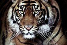 Zwierzaki ♥ Animals