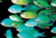 Aquarium and Sea Life