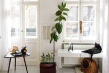 Interiors / by Kendall Barry