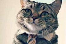 I ♥ cats  / by Melissa Kozniacki