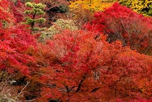 """Awesome Autumn / Fall is one of my favorite seasons --- along with Winter and Spring!   I grew up on the East coast where the fall color is always magnificent.  In Colorado, when people talk about """"color,"""" they mean the golden aspen trees (which are pretty, but NOT the abundant shades of autumn I love). / by Faye J. Gibson"""