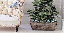 Christmas at Björkåsa