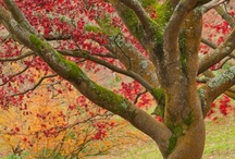 Trees / by Wendy Plake