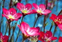 everyone love's flowers