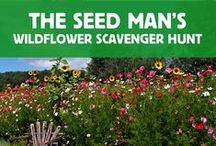 The Seed Man's Wildflower Scavenger Hunt! / Throughout the month of October, we'll help give you planting ideas while going on a fun wildflower seed scavenger hunt together! Follow our steps in the pin below for the chance to win one of 12 $50 Gift Cards.   THEME FOR WEEK #1: POLLINATOR FAVORITE WILDFLOWERS! Remember to use the hashtag #AMISEEDHUNT on all your posts for the chance to win.