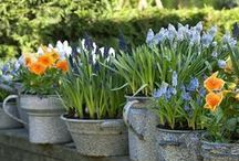 Container Gardening / Container gardening isn't all veggies and annuals - hardy bulbs and perennials look spectacular in pots and planters and can work beautifully in shady spots.