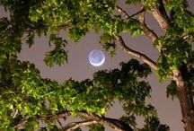 Oak Forest / Дубрава