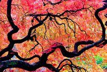 I love trees / I love trees