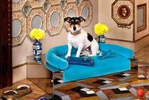 Animal Haus / Life + Pets + Design