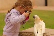 Birdies / by Stephanie Plum