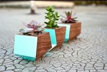 GREEN Thumb / Garden envy