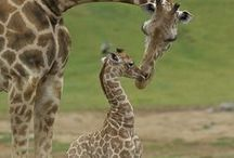 Animal Fun/Cuteness