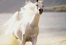 Horses / Variety Horses  / by Ramabhadran Sreedharan