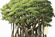 Trees / Trees of Variety / by Ramabhadran Sreedharan