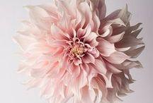 Flora / Gorgeous flowers.