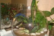 Terrarium India / Terrarium India in Thiruvananthapuram, Kerala is the No.1 manufacturers and suppliers of all types of Garden Plants, Bottle gardens/Terrariums and Plants in Self Watering Containers  in India.  / by Ramabhadran Sreedharan