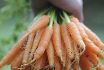 Vegetable Gardening  / Collection of Vegetable Garden Related Resources / by Ramabhadran Sreedharan