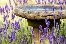 lavender love / I love lavender.