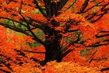 fall / The autumn of our life.