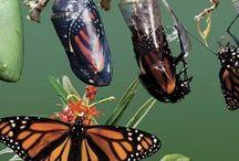 butterflies of all ages / Butterflies