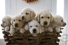 Puppy Love... / by Linda Johnson