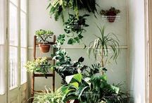 The Impossible Garden / Plants, apartment gardens, balcony pot plants, windowsill gardens, herbs, green walls, urban spaces.