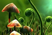 forest floor / The forest floor