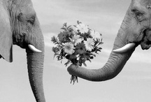luck of the elephant / by Jill Winston