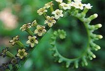 Plants I Love / by Coty Elvir