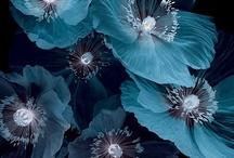 ~Atlantic, Juniper Berry, Peacock,  / Colors- Blues / by FreeKLR NUrF8z