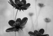 ~Neutrality / Photography: Black and White, Sepia, Navy, Creamy, Rosy, Peachy or Grey / by FreeKLR NUrF8z