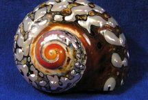 Shells / by Linda