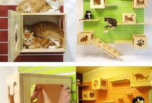 Pet care tips / All about cat