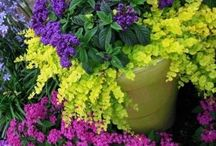 Botanicals / by Sharon Backer