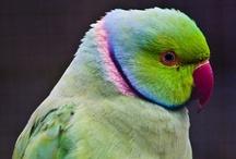 Birds of a Feather... / by Gloria de Lourdes Blalock (Méndez)