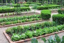 .TANAGER. Kitchen Garden / by Jennifer Lindsey