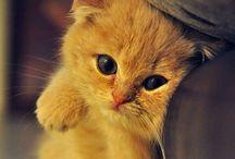 Eeeeeeeekkkk! Cute Animal Alert / Adorable Animals