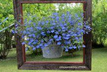 Curb Appeal / Gardens & Flowers
