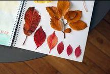 Herbarium / I have a love affair with herbariums <3